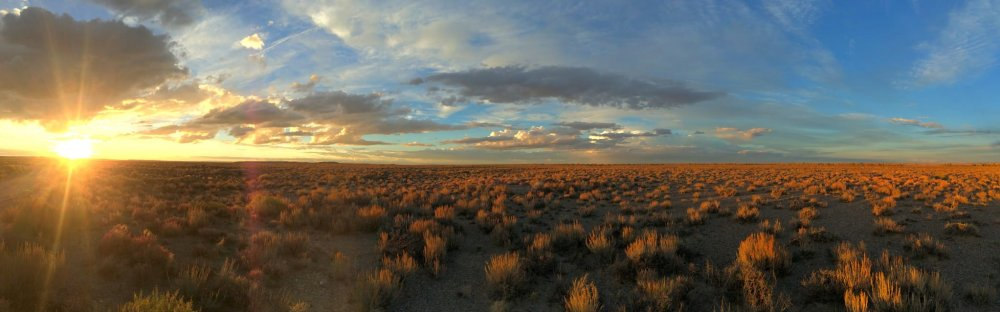 The last rays of sunlight catch the seedheads of Wyoming big sagebrush on Seedskadee National Wildlife Refuge. Photo by Tom Koerner/USFWS. Tweeted by the US Department of the Interior, 11/15/16.