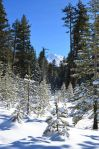 lassen-np-35-snow