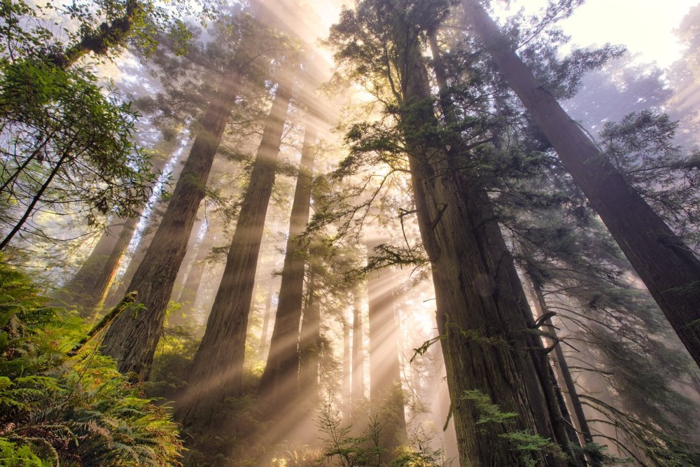 Thick fog, sunrays & the tallest trees in the world ... California's Redwood National Park is a must-visit. Photo by Vincent James. Tweeted by the US Department of the Interior, 1/27/17.