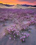 Death Valley NP 42 – Sunset