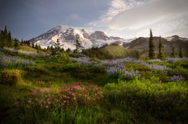 Ascending to 14,410 feet above sea level, Mount Rainier stands as an icon in the Washington landscape. Subalpine wildflower meadows ring this icy volcano while ancient forest cloaks its lower slopes. Created March 2, 1899, Mount Rainier is America's fifth oldest national park. Photo by Vikas Garg. Posted on Tumblr by the US Department of the Interior, 3/2/17.