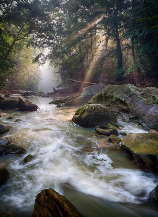 Streaming sunlight & summer serenity at Cuyahoga Valley National Park. Photo by Jerry Jelinek. Tweeted by the US Department of the Interior, 7/7/17.