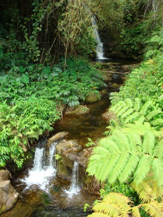 Green 7 - Akaka Falls 6 - Kahuna Falls