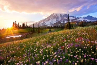 Summer sunset over Mount Rainier National Park. Photo Danny Seidman. Tweeted by the US Department of the Interior, 8/20/15.