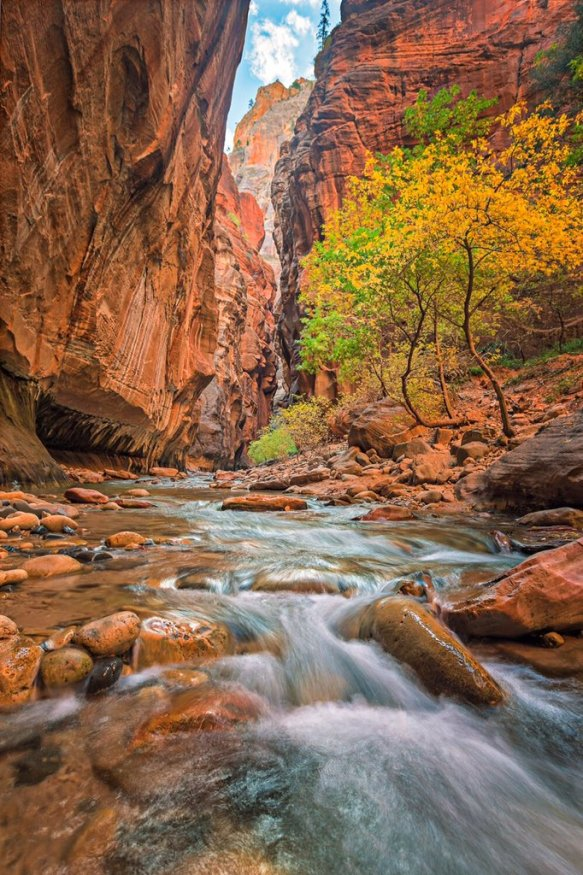 Zion National Parks The Narrows, in fall color. Photo by Evan Kokoska. Tweeted by the US Department of the Interior, 10/20/15.