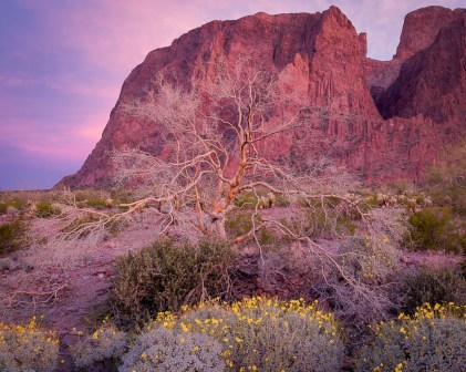 Kofa National Wildlife Refuge is the second largest wilderness area in Arizona. A campaign by the Arizona Boy Scouts helped establish the refuge in 1939 to protect desert bighorn sheep and other wildlife. The refuge's name – Kofa – comes from an acronym for one of the area's most notable mines, the King of Arizona gold mine. Photo of mountains, palo verde & brittlebush by Brian Powell. Posted on Tumblr by the US Department of the Interior, 8/18/16.