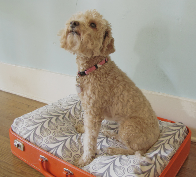 Suitcase DIY dog bed