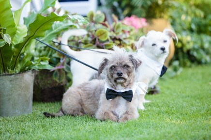 Hillcrest Country Club. Garden wedding. Dog ring bearers. Moxie Bright Events.