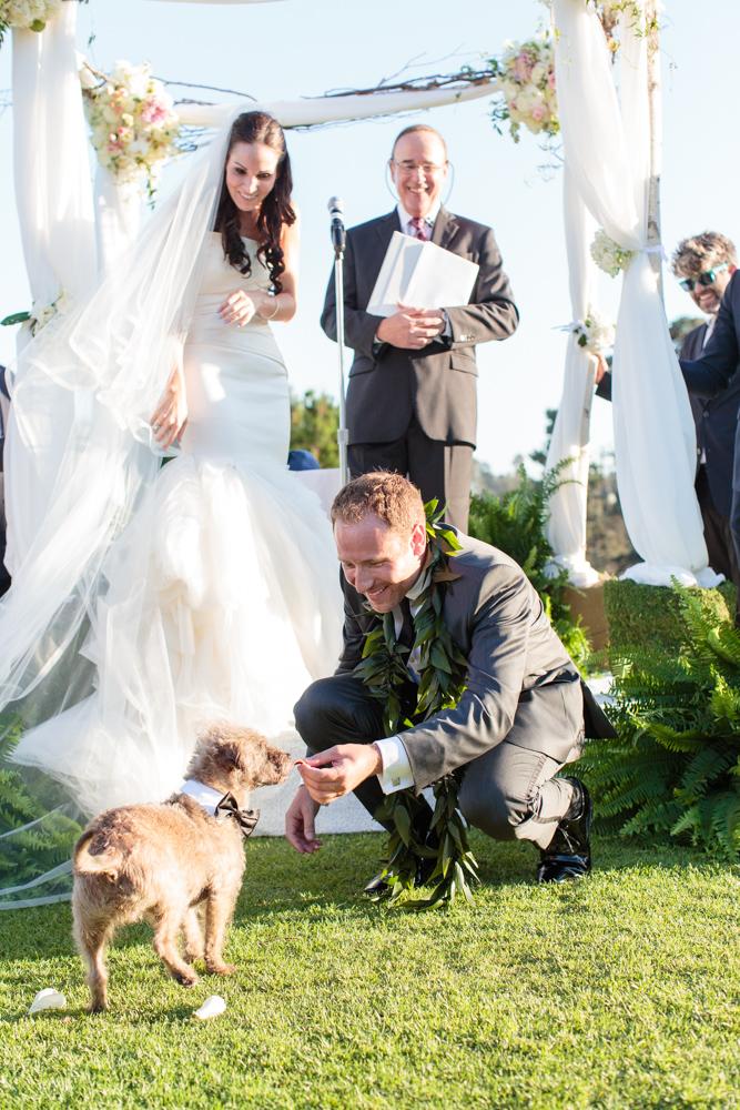 wedding ceremony, dog ring bearer