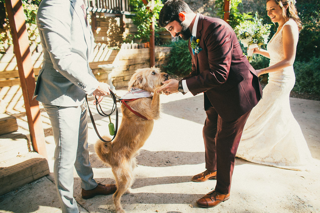 Groom and dog on wedding day