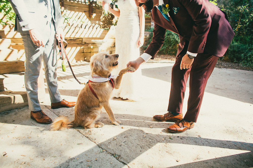 groom and dog shake hands on wedding day, the 1909 wedding venue