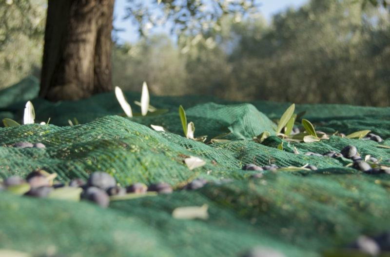 Как сохранить искусственный газон идеальным осенью и зимой кубань