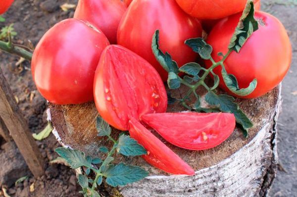 Томат quotВельможаquot характеристика и описание сорта помидор