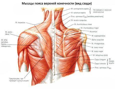 Deteriorarea mușchiului de rotație a articulației umărului - apartament-in-cluj.ro