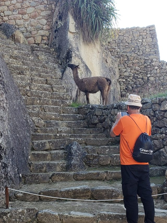 What's a Llama? Bucket List Feeding Llamas in Peru! 3 20190608 150428