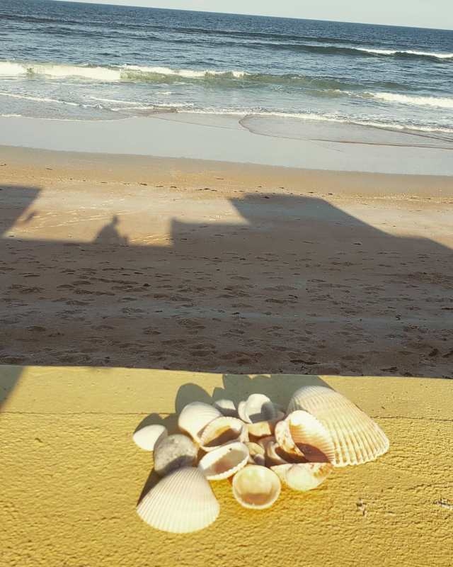 Beverly Beach Camptown, Flagler Beach, Florida - seashell hunting treasure finds