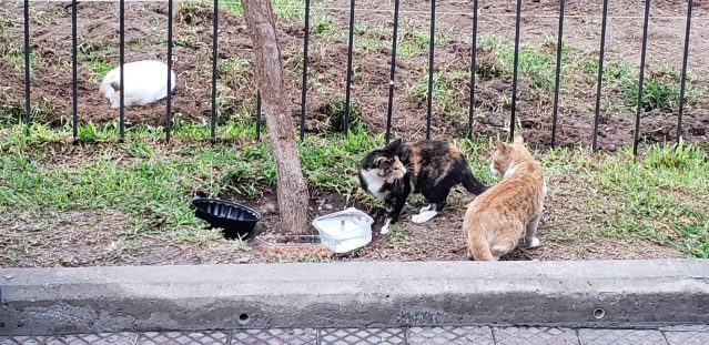 Food and water bowls for all the cats at Kennedy Park in Lima, Peru