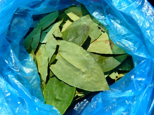 Coca Leaves - great for altitude sickness prevention