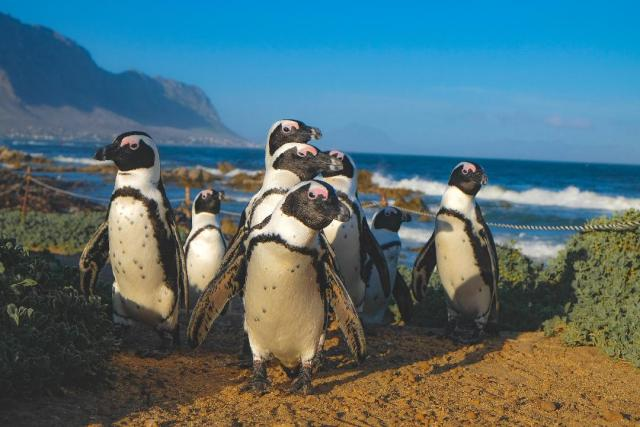 Exciting Day Trips From Lima Peru 2 penguin