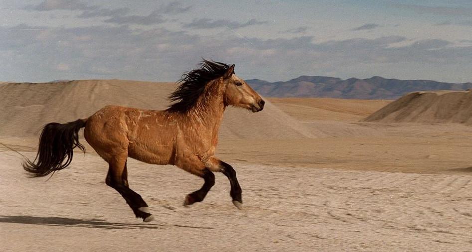Мустанг бежит по пустыне