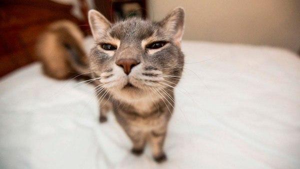 Самые смешные фото кошек — Мой лохматый друг
