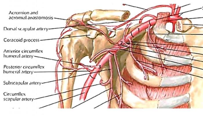 vătămarea umărului când trageți în sus tratament articular la nivelul piciorului