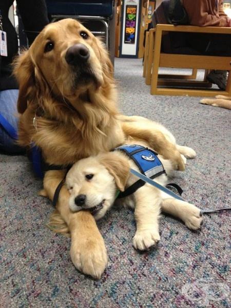 Дори терапевтичното кученце има нужда от малко терапия с мама