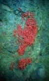 Bhivpuri_23