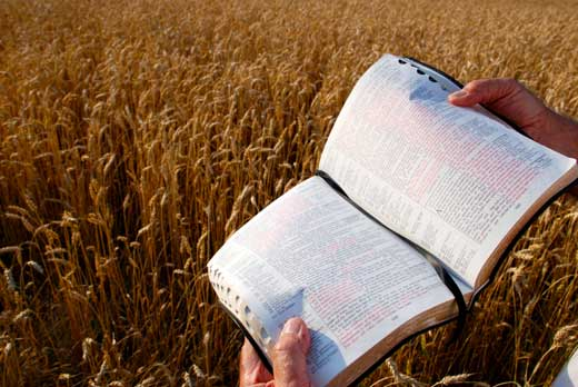Image result for Sowing the word of God