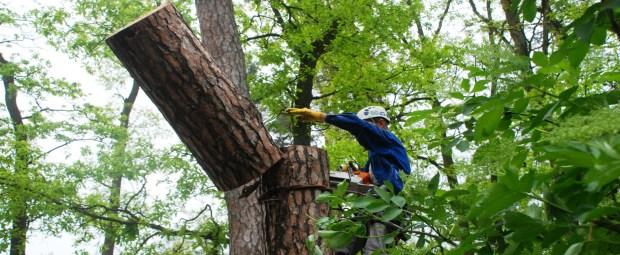 удаление деревьев на участке (когда и как нужно делать)
