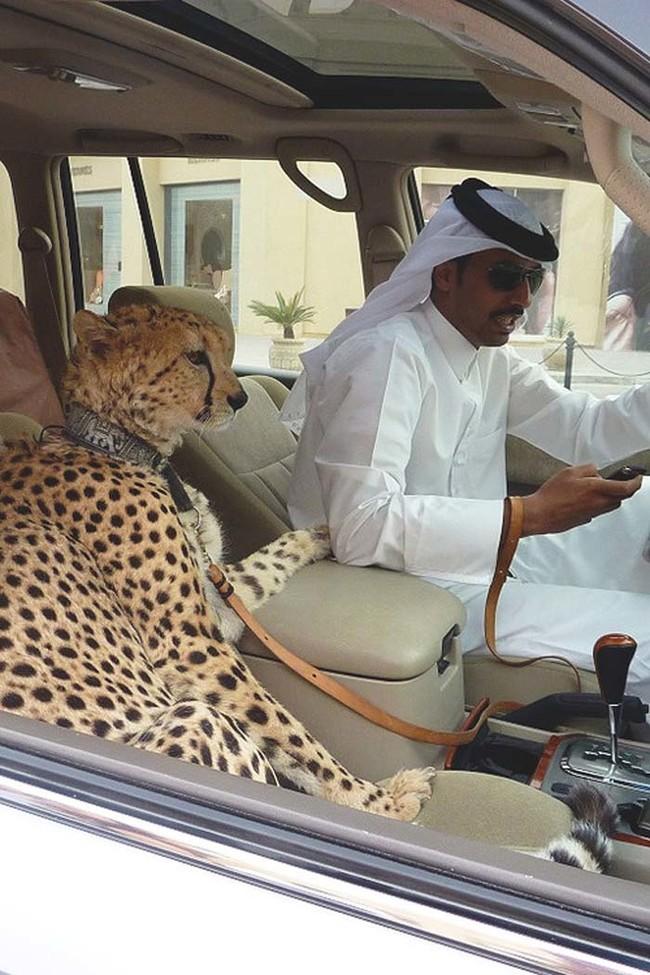 See-Crazy-Stuffs-Too-Much-Money-Make-DUBAI-Billionaires-Do See Crazy Stuffs Too Much Money Make DUBAI Billionaires Do