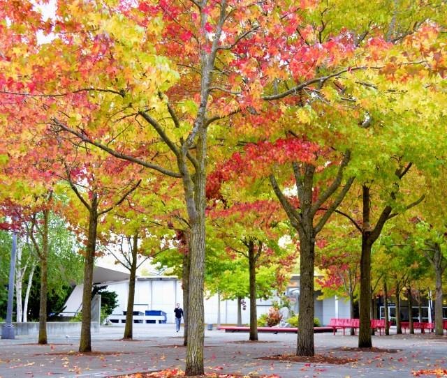 Selamat Tinggal Musim Selamat Datang Musim Gugur Tapi Sebelum Gugur Tunjukan Dulu Keindahan Dedaunmu Ketika Bertukar Warna