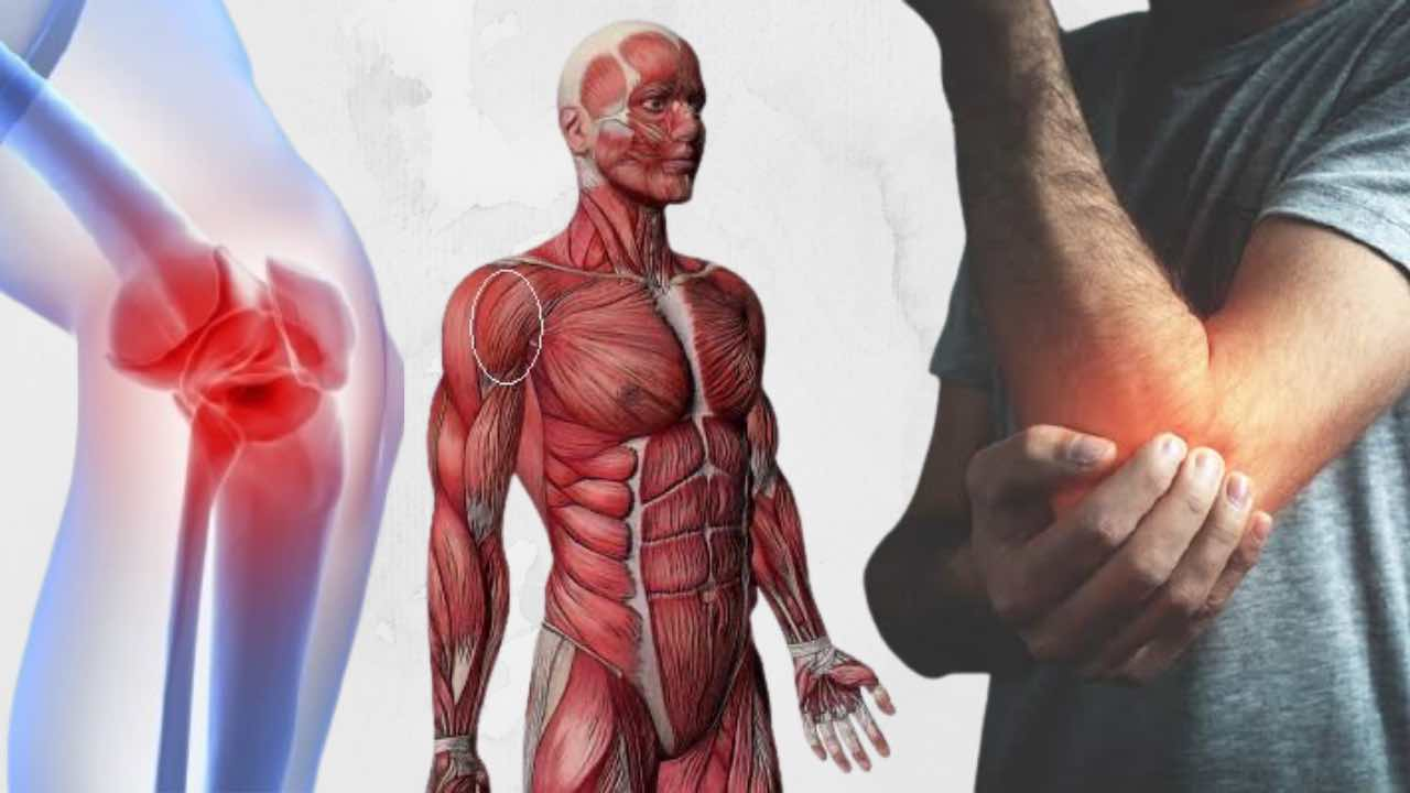 Joint Pain Solution