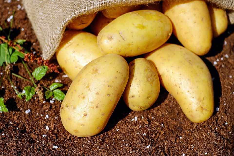 Use of raw potatoes For skin