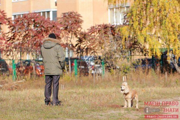 собаки (14)