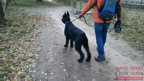собаки (7)