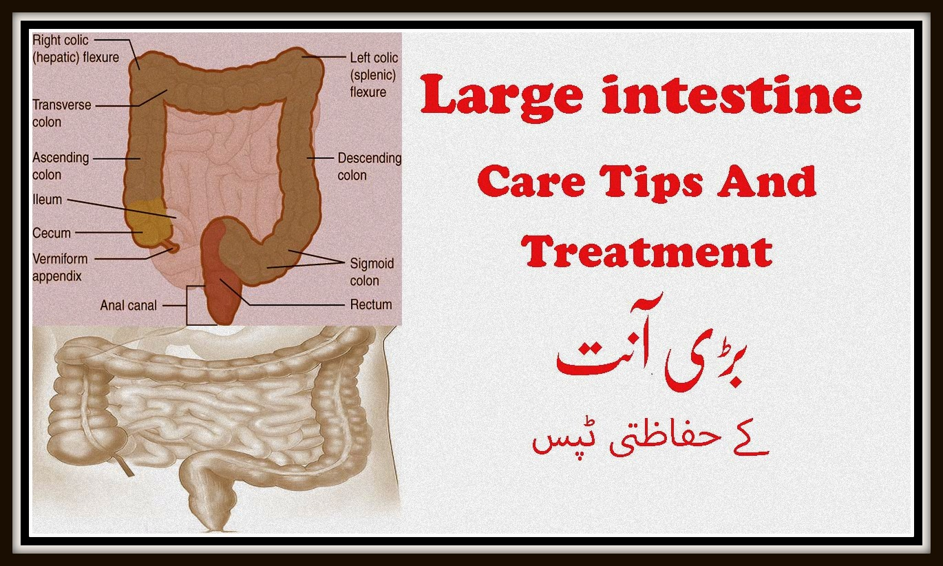 Large intestine Care Tips And Treatment