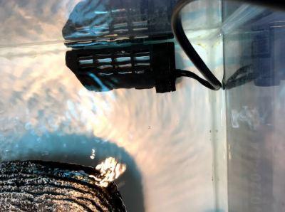 水棲亀_オートヒーター