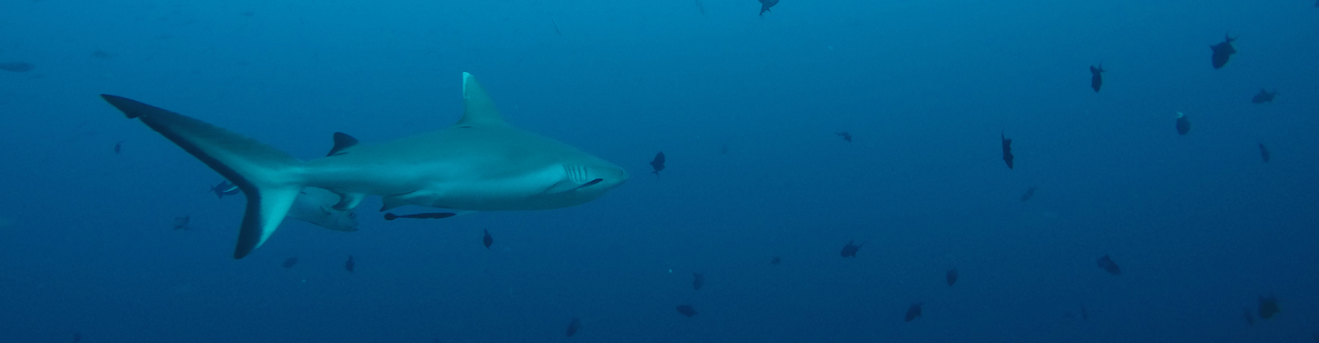 Permalink to: Diving the Maldives
