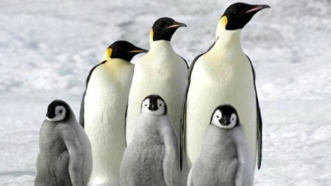 La Marcia Dei Pinguini Il Richiamo In Streaming
