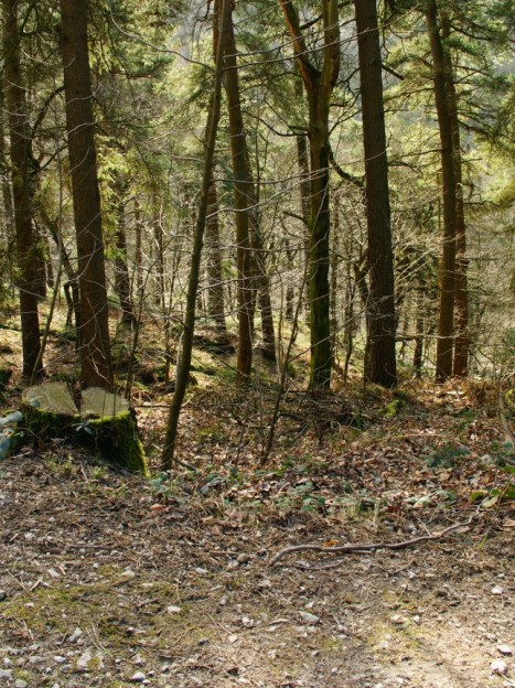 Hardcastle Crags 14