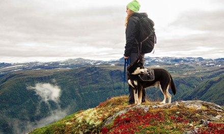 Comment faire du sport avec votre chien ?