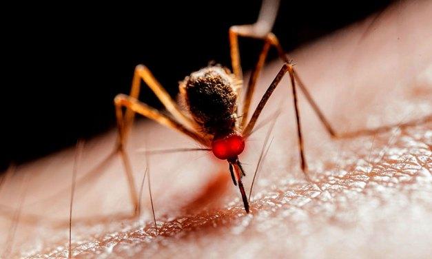 Qu'est-ce qui attire les moustiques ?