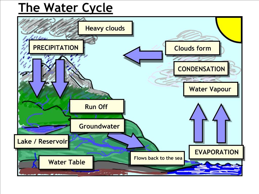 Week 5 Cycles Nitrogen Oxygen