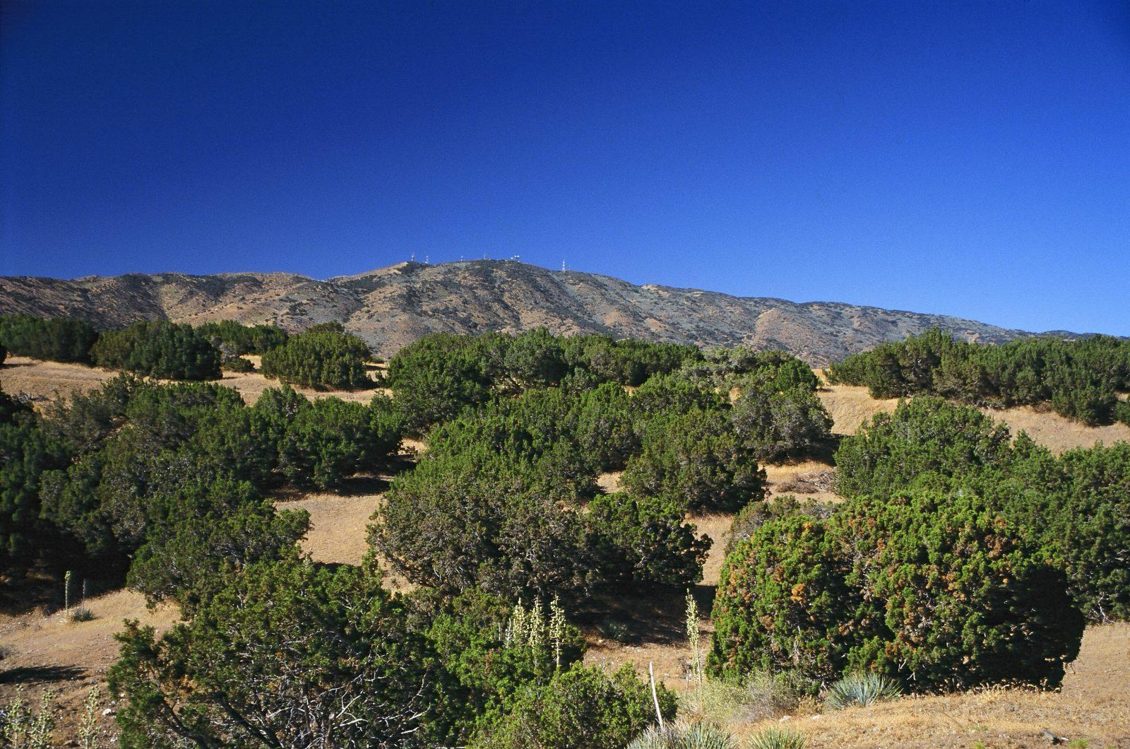 Ritter ranch