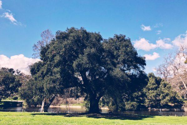 King Gillette Ranch - Wedding Tree