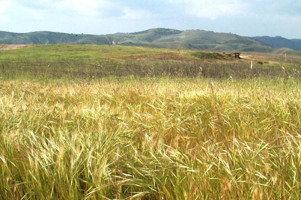 Upper Las Virgenes Open Space Preserve