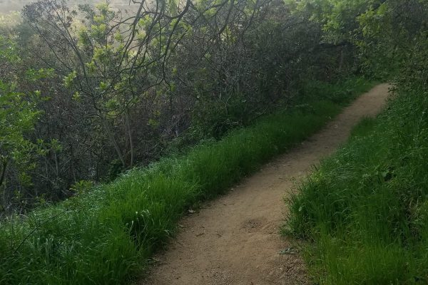 Franklin Canyon Park Mrca