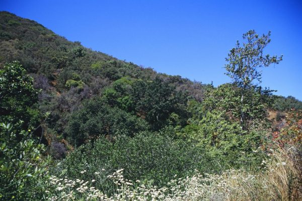 La Tuna Canyon Park