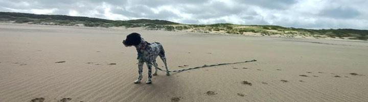 Decaf perra de agua